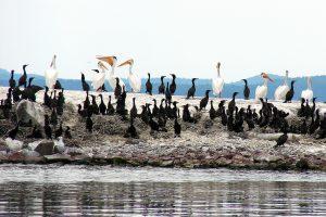 4th September - Mary Chadwick - Seagull Island Black Bay