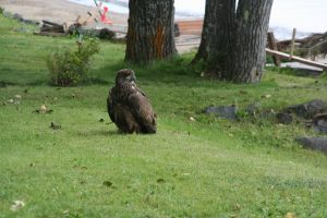 Martin Skillen - Eagle at Ishkibble Beach